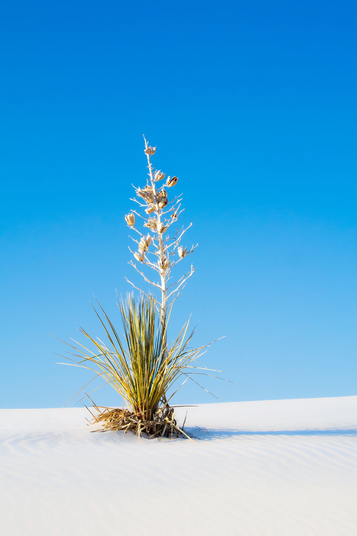 SORT OF A MONUMENT - I took this shot in White Sands National Monument in New Mexico.