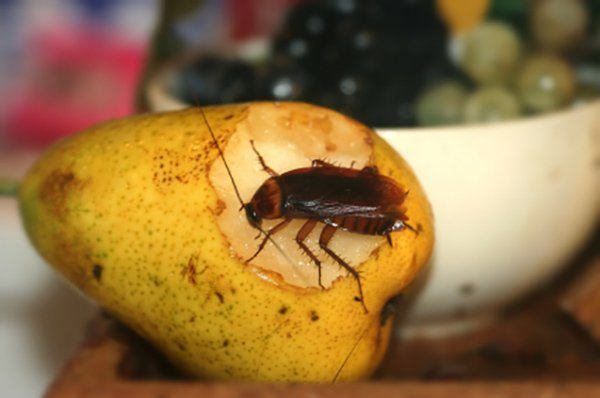 Cockroach on fruit