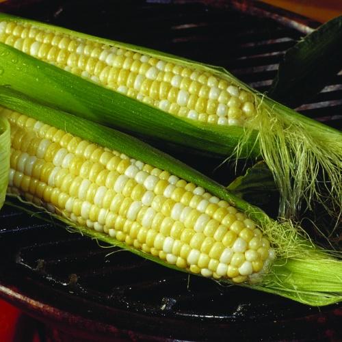 Sweet Corn Bicolor Trinity