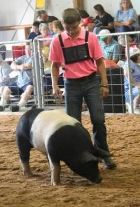 Andrew Thompson: Class Winner 2015 Henry County Fair