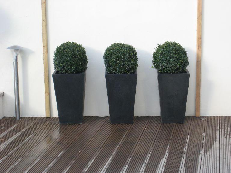 Contempory Topiary In Blackrock