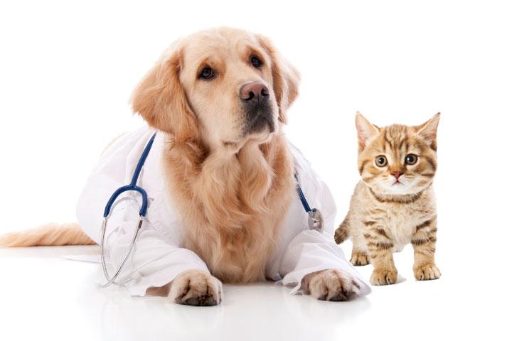 Faça um plano de saúde para seu melhor amigo!