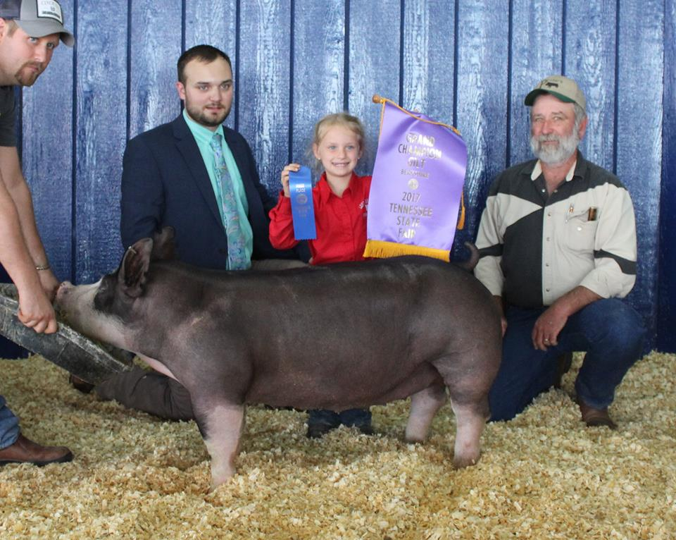 Laine Vinson 2017 Tennessee State Fair Champion Berkshire Gilt