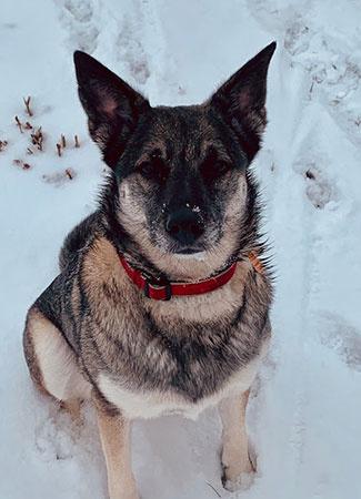 Sadie, Detection Dog