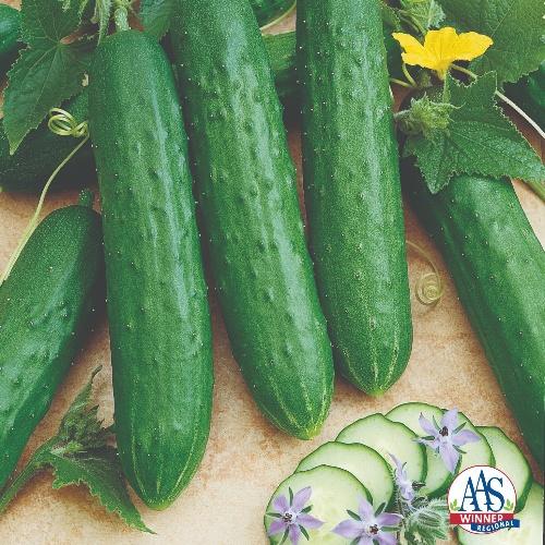 Cucumber Slicing Saladmore Bush F1