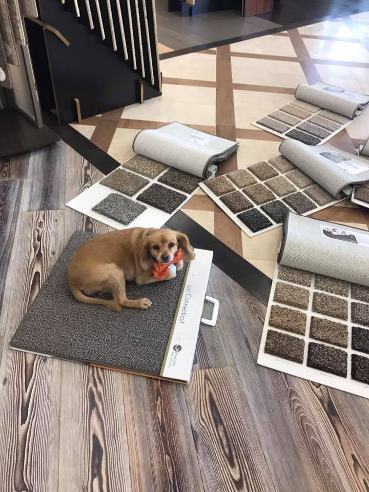 Lady helping a client pick carpet  from Kraus