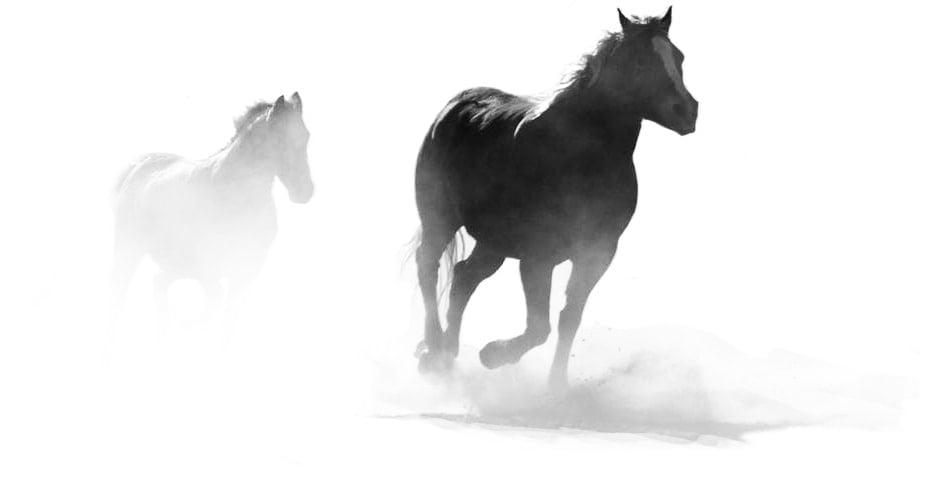 Stylized horses running