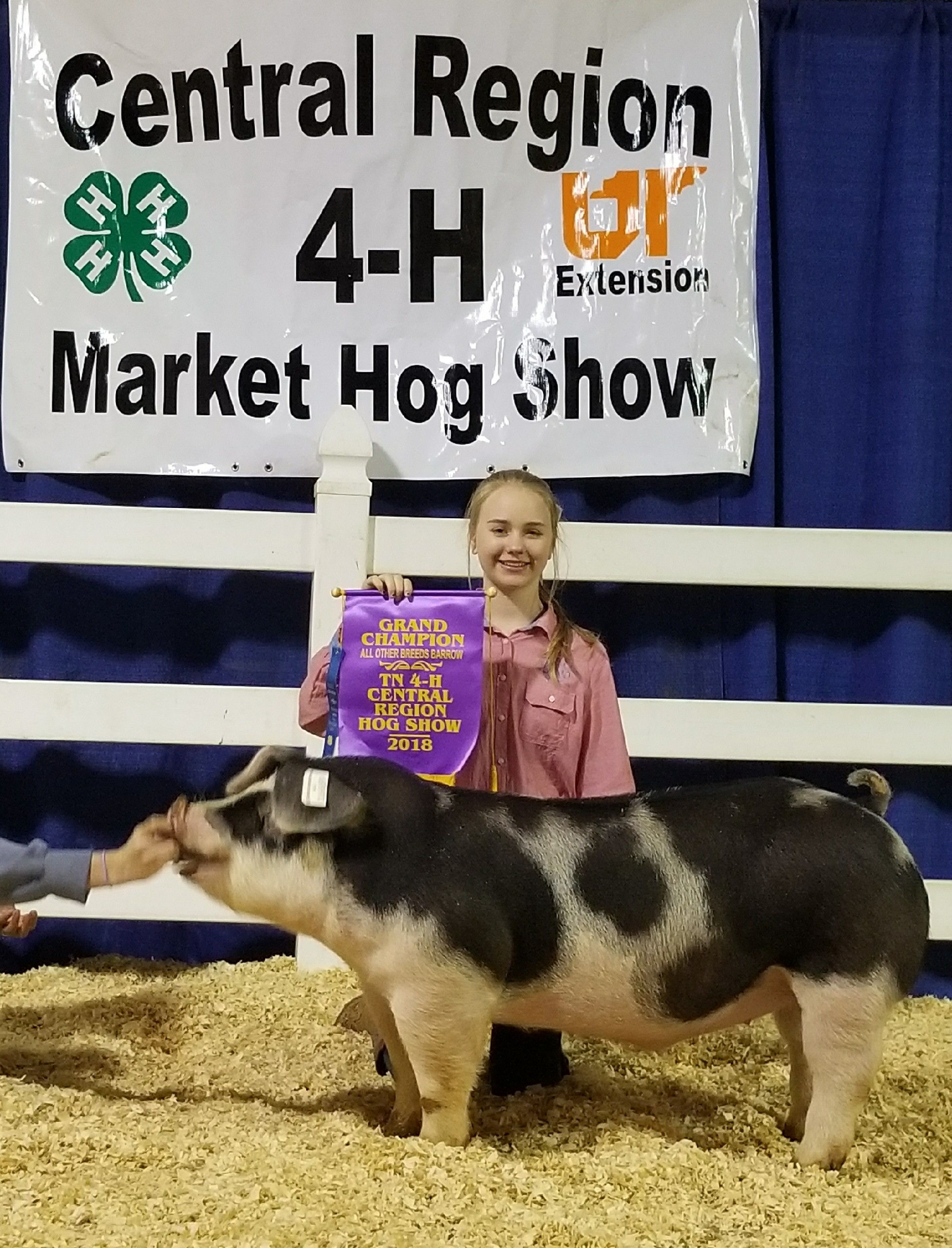 Hannah Sanders 2018 Tennessee Central Region Show Central Region Champion Spot Barrow 2018 Tennessee State Show    Reserve Champion AOB Barrow