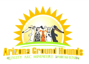 Arizona Ground Hounds in Litchfield Park, AZ is a dog breeder of Miniature Dachshunds.