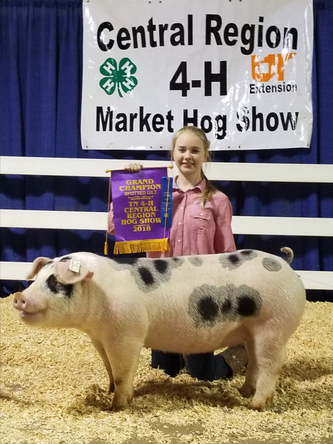 Hannah Sanders 2018 Tennessee Central Region Show Central Region Champion Spot Gilt 2018 Tennessee State Show  Reserve Champion AOB Gilt