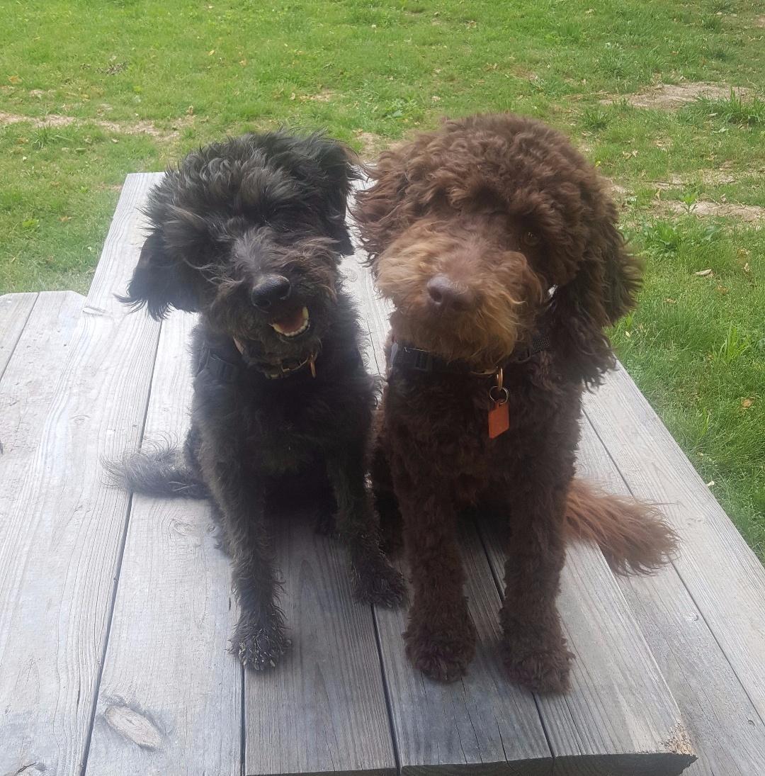 Lilli & Sawyer