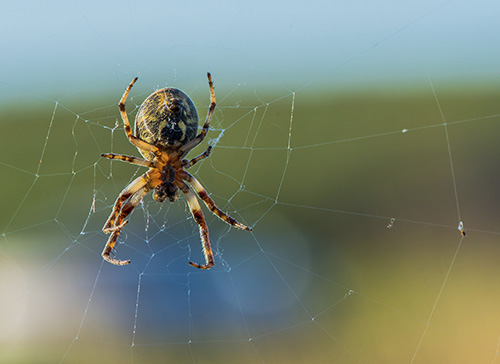 Close up spider