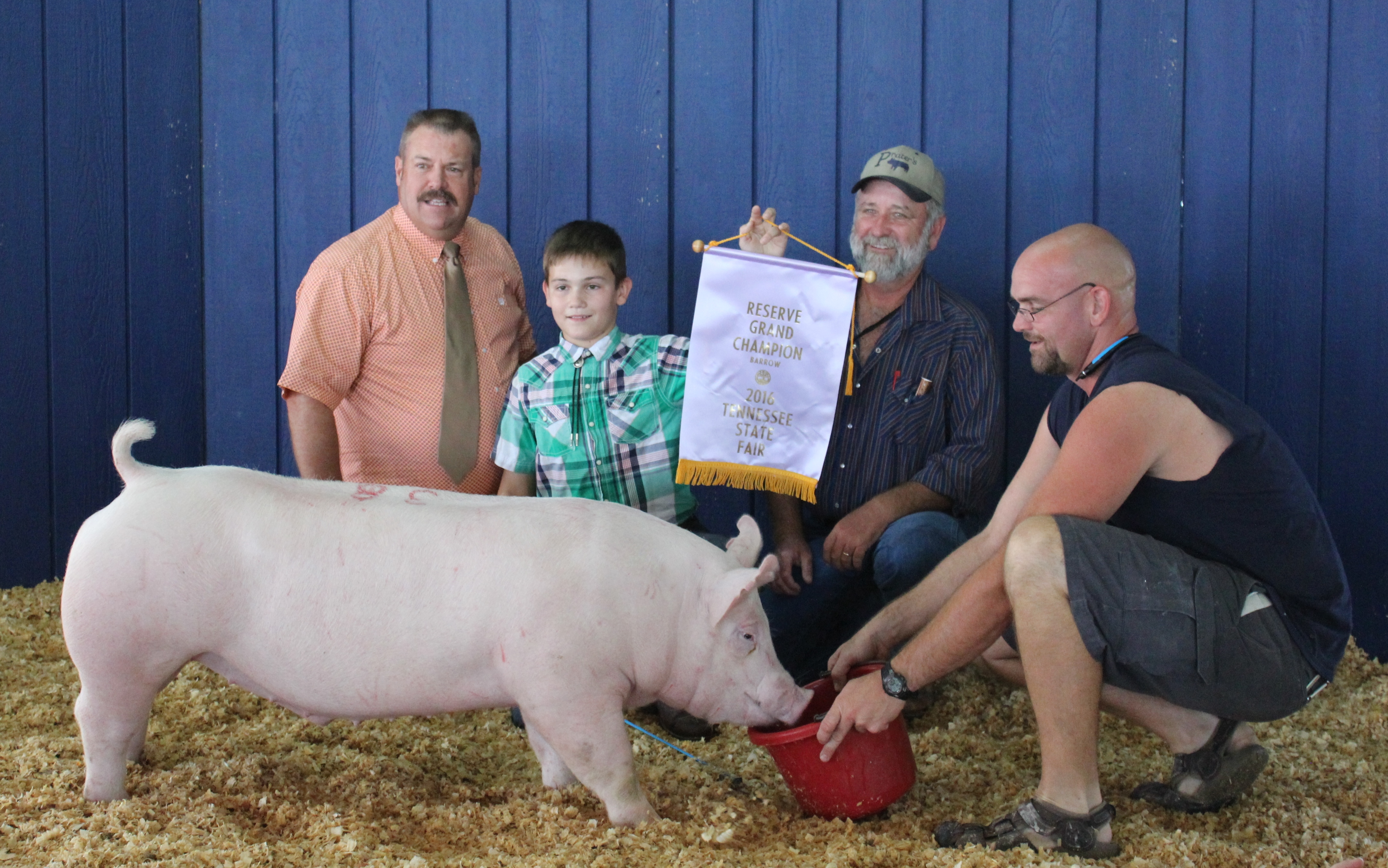 Kalan Lusk 2016 Tennessee State Fair Champion Yorkshire Barrow  Reserve Supreme Champion Barrow