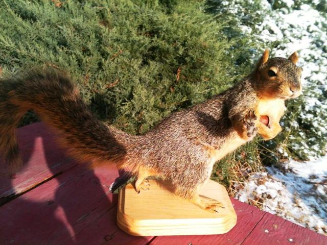 Heisman squirrel