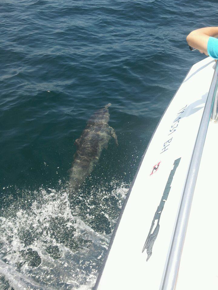 dolphinwatching.jpg