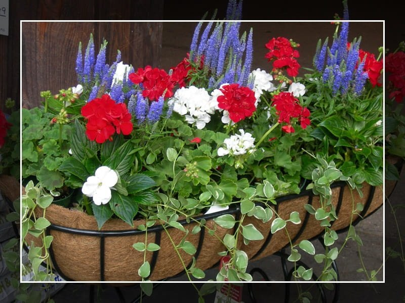 Red, White, and Blue Planter