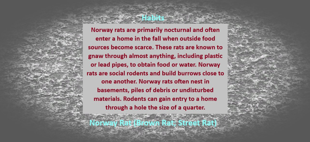 https://0201.nccdn.net/1_2/000/000/17a/753/Norway-Rat-Habits-1284x588.jpg