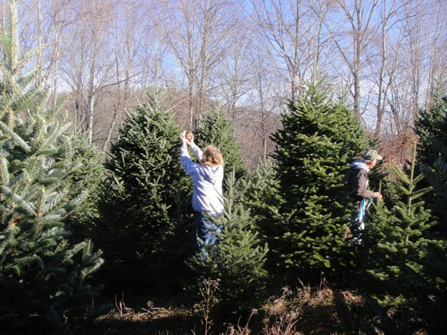 We have to be sure to tag the trees as high as possible so we can find them when it comes time to cut.