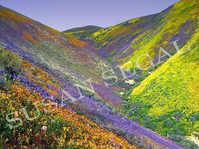 Field of Dreams - Gorman, CA