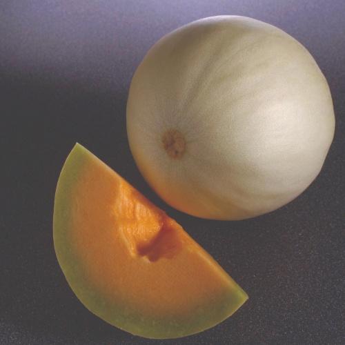 Melon Temptation