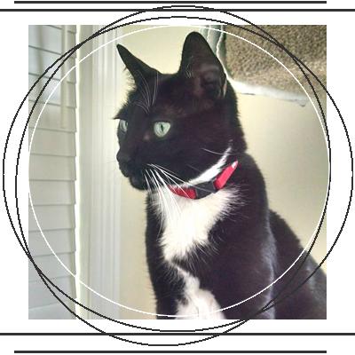 Whiskey the Tuxedo Cat