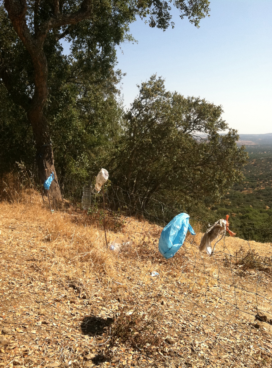Blue plastic bags and other trash attached to a wire fence on a dry rural hillside.