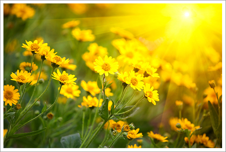 Yellow flowers and sunlight||||