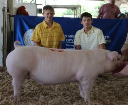 Will & Gill Derryberry: Champion Chester White 2015 Tennessee State Fair