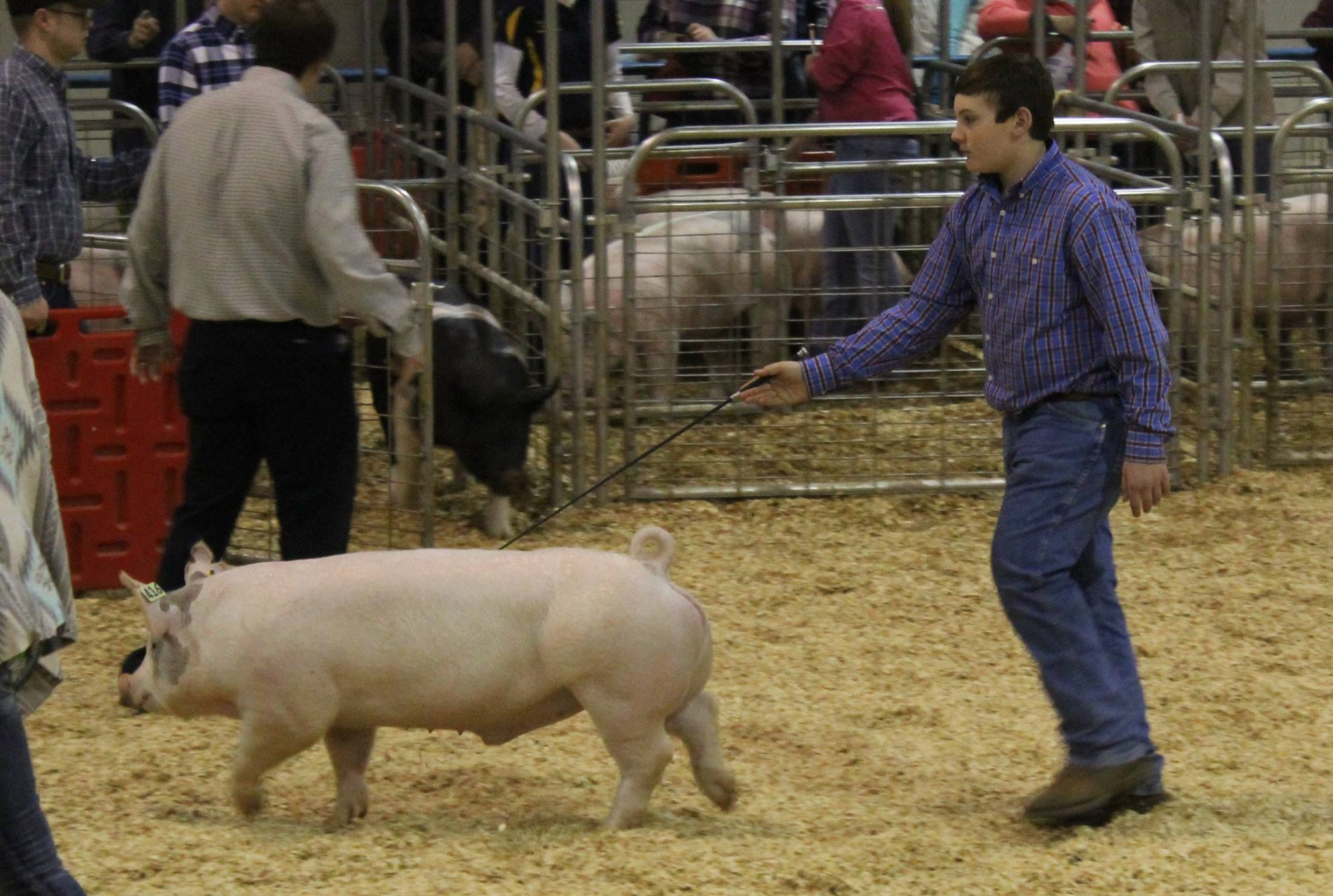 Will Prater 3rd in Class 2016 TN State Market Hog Show