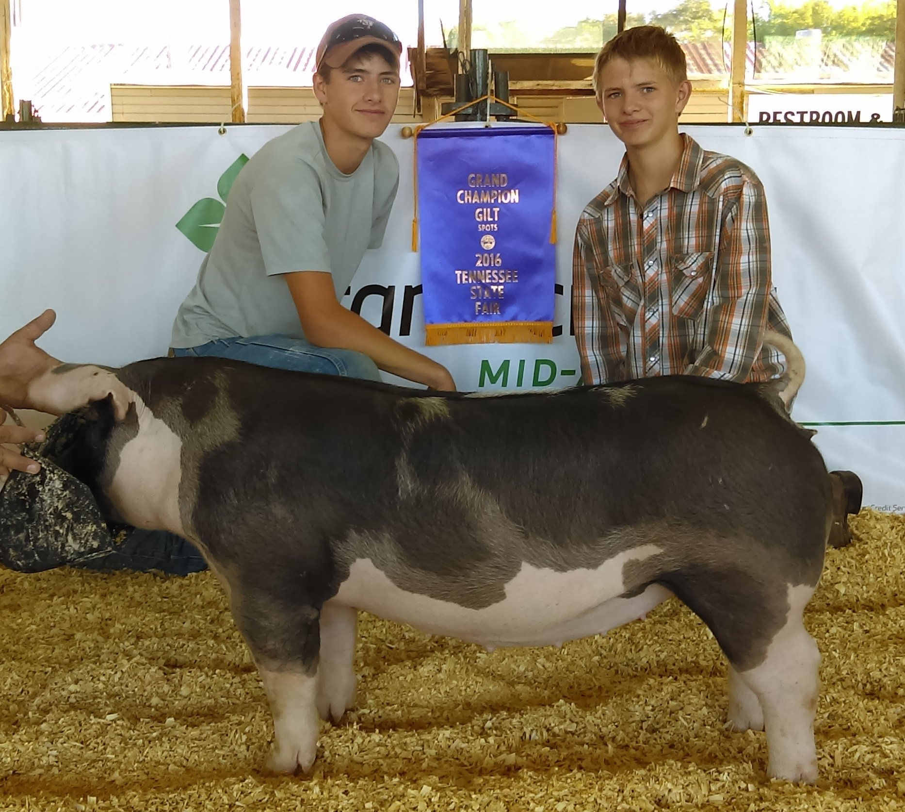 Will and Gill Derryberry 2016 Tennessee State Fair Champion Spot Gilt