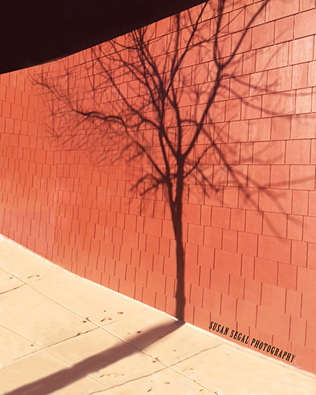 Shadow of a Tree - Yountville