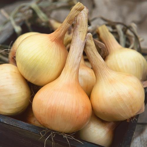 Onion Walla - Walla