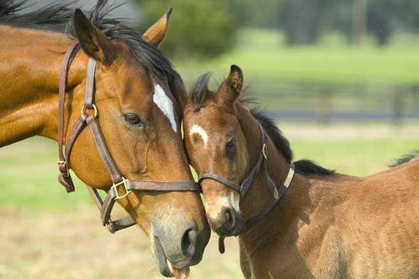 Beautiful Horse Mare and Foal in Green Farm