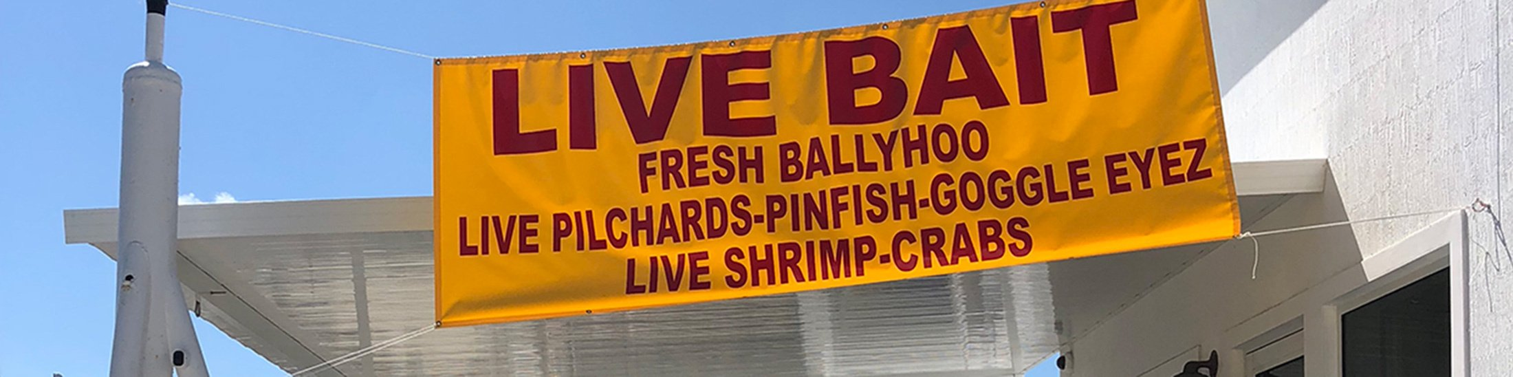 Live Bait for Sale