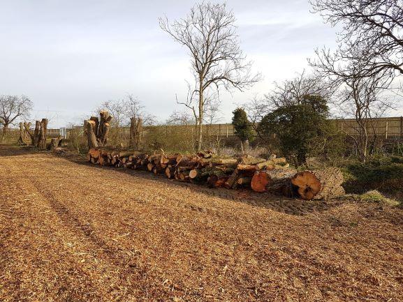 Tree Work - Cambridgeshire