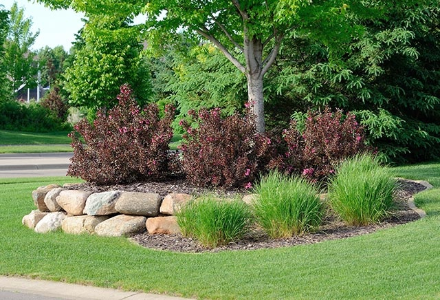 Landscaping with Weigela Shrubs