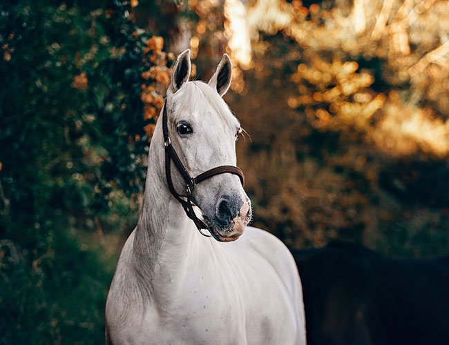 Offering Affordable Horse Supplies