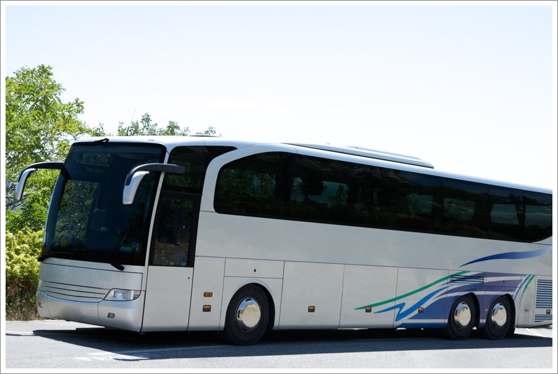 Bus with design on side||||Passenger Carriers