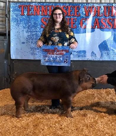 Alexis Mears Champion Duroc Market Hog 2021 TN Volunteer Swine Classic