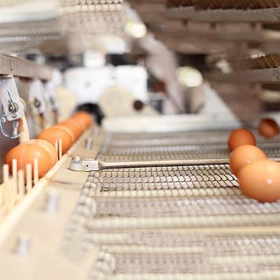 Farm-Fresh Eggs 2