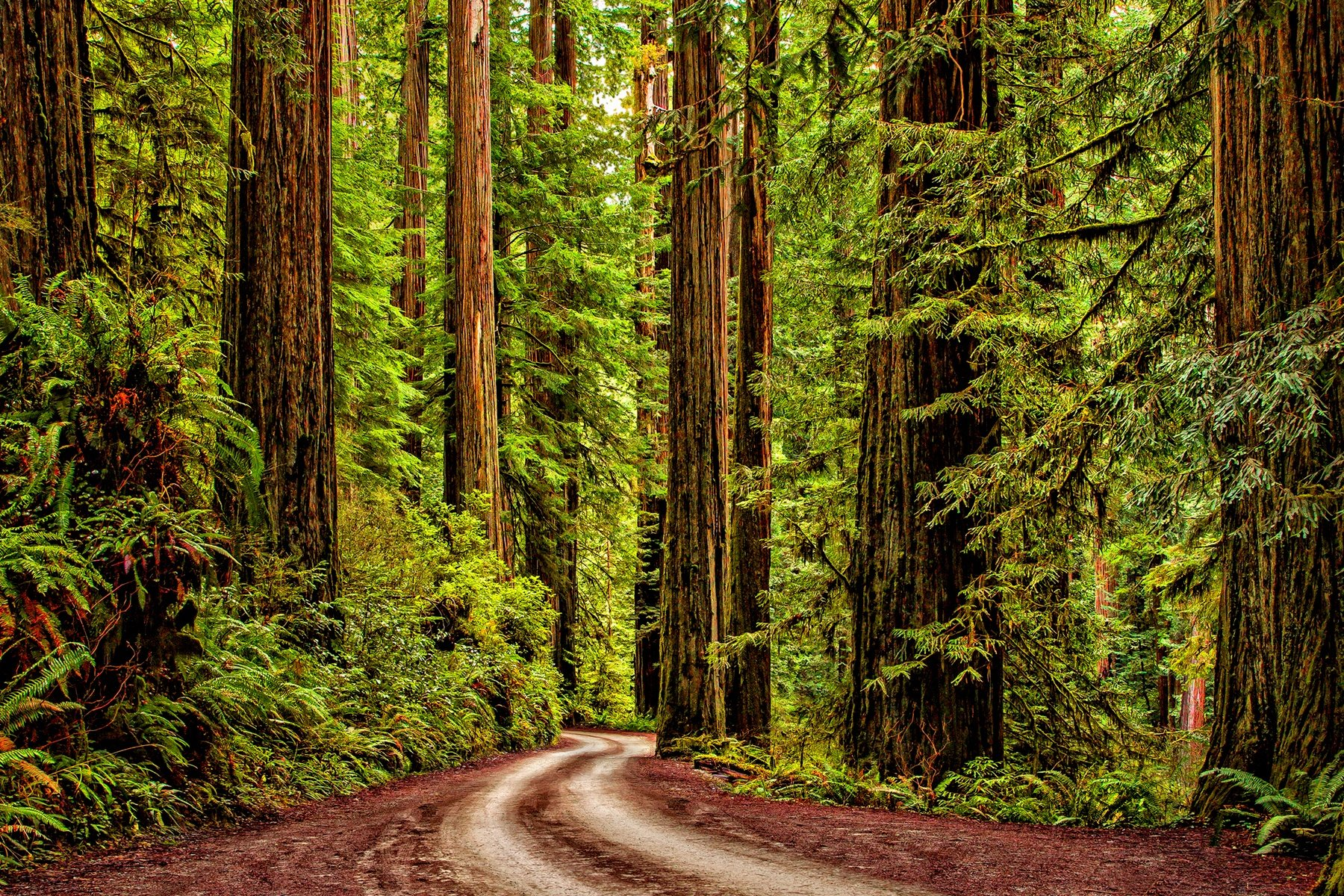 REDWOOD ROAD - This unbelievable drive winds for several miles across the forest floor of Jedediah Smith Redwood State Park in northern California. If you need a reason to travel to California, this is it.