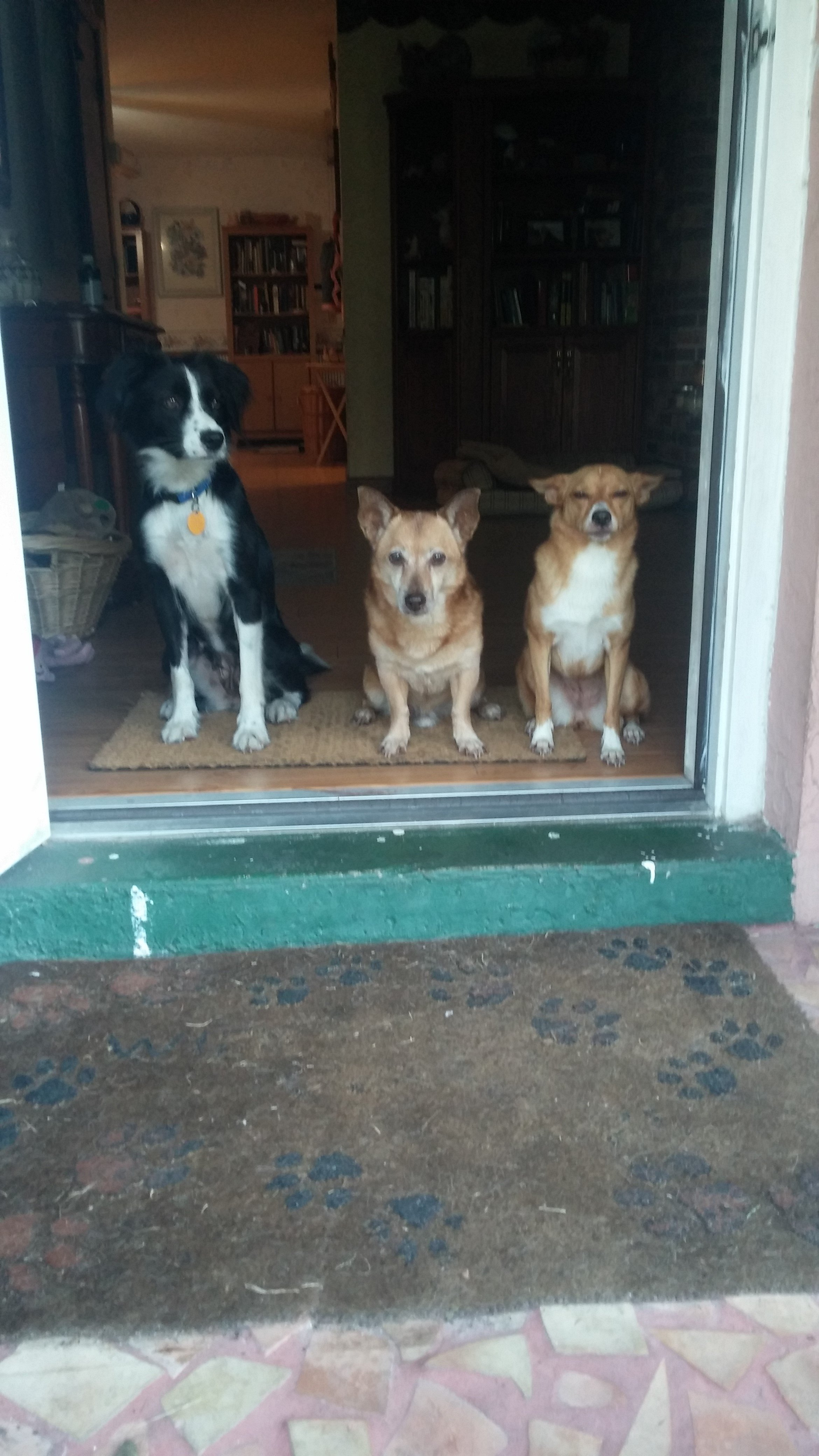 Three Dogs by the Door