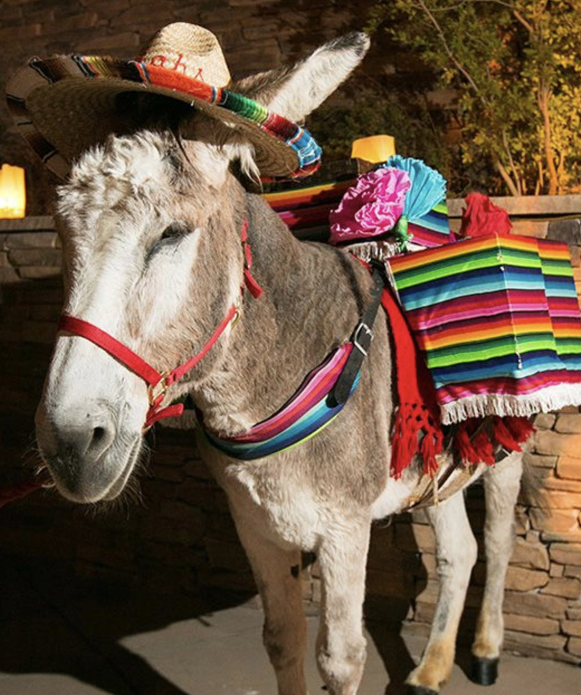 Tequila Donkey for Weddings & Celebrations