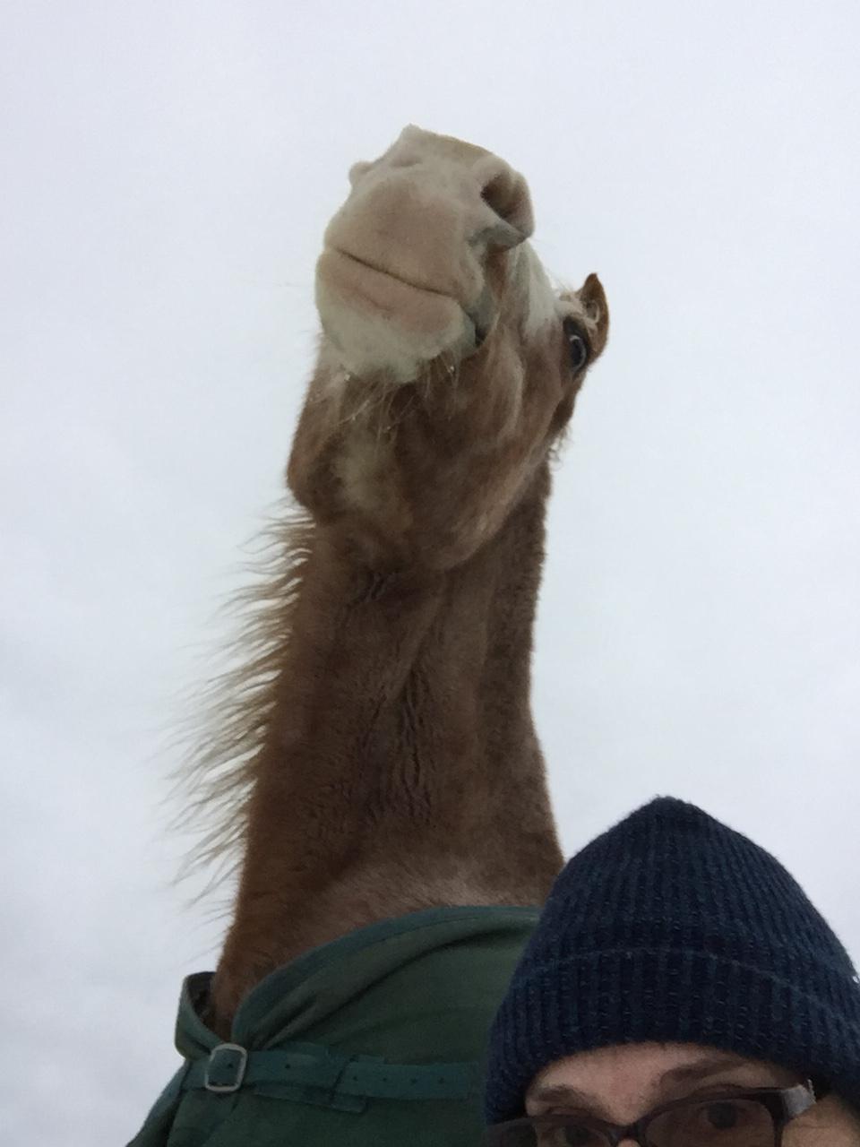 Laurie Cavan and Horse