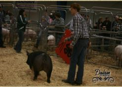 Garrett Franklin 1st in Class 2015 TN State Market Hog Show