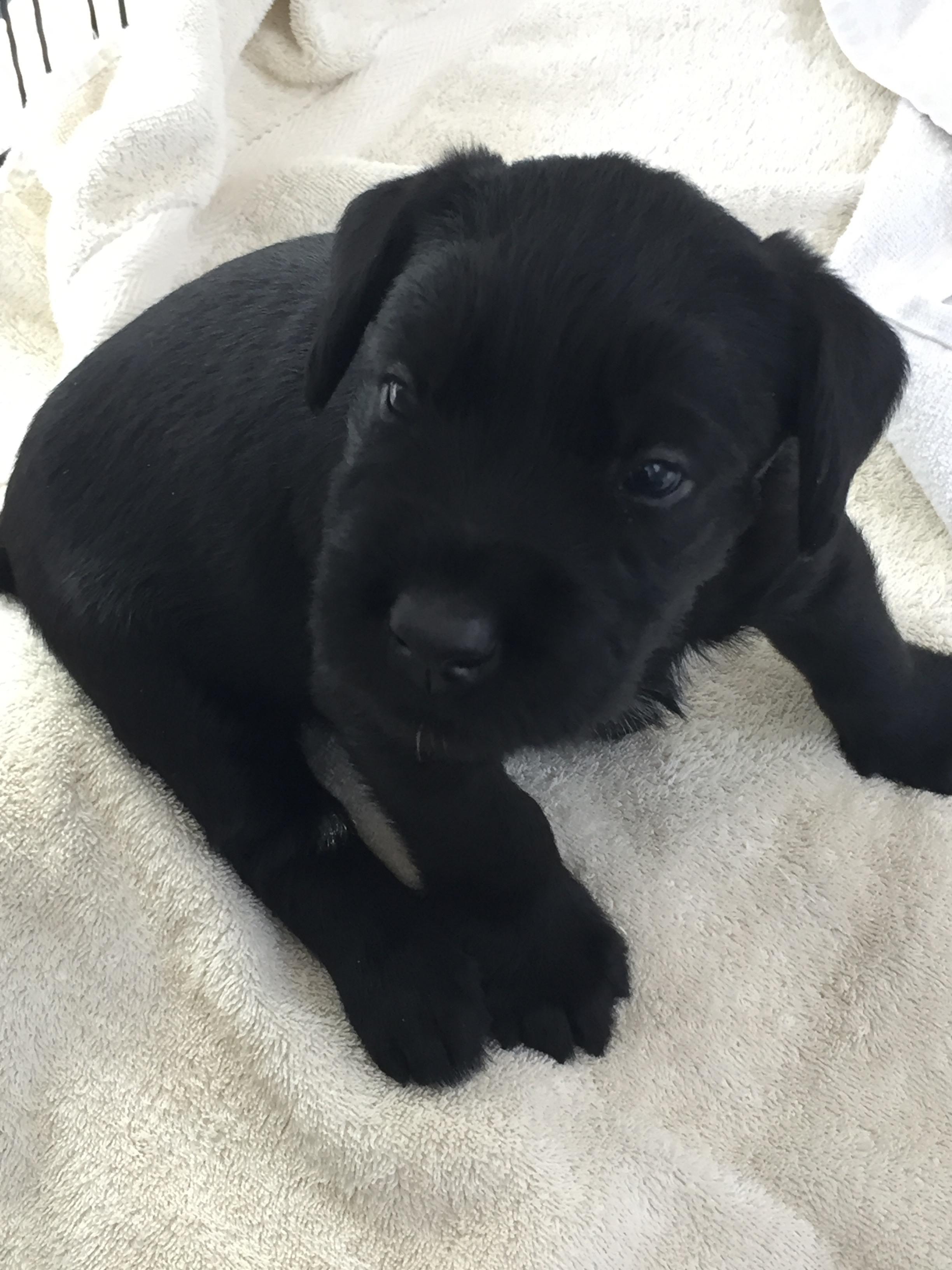 https://0201.nccdn.net/1_2/000/000/195/1d1/Puppy-4.jpg