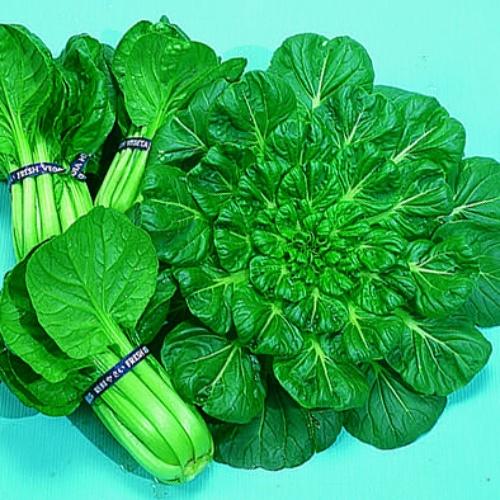 Tatsoi Oriental Green