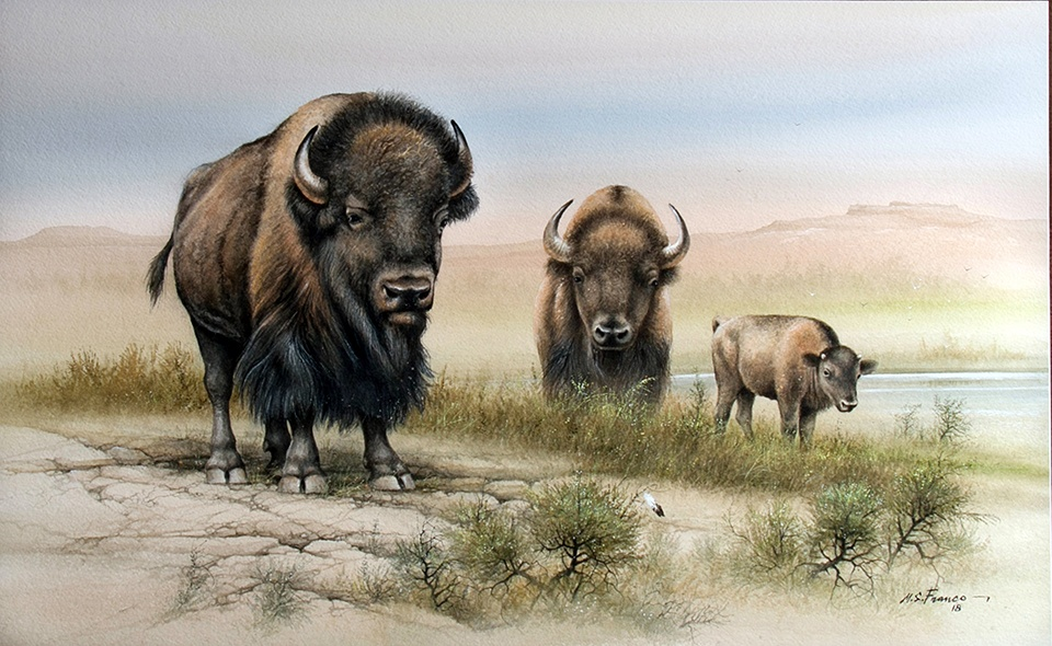""" Buffalo at Goodnight Ranch"" Image size 16 x 26"" Watercolor"
