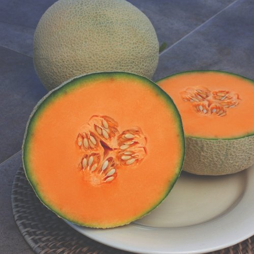 Melons Eastern Types Infinite Gold F1