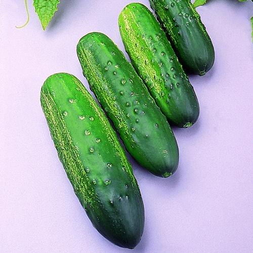 Cucumber Calypso